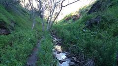 20160716_150427 (StephenMitchell) Tags: adelaidegreenhills nature organic trees gully valley hill mountain blackwood belair edenhills southaustralia trek walk creek rock stone