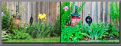 Marilee Fence Flowers (Douglas Coulter) Tags: flowers