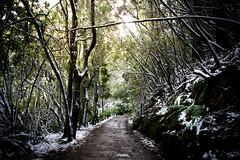 Fern tree (jgazzignato) Tags: green trees tree landscape path walk mount wellington snow forest tasmania hobart australia