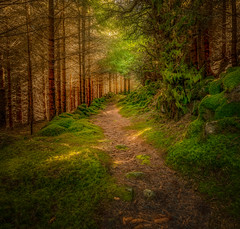 Into the forrest. (BjrnP) Tags: trees forrest colors light bjrn peder bjrkeland path nature green yellow norway egersund explore