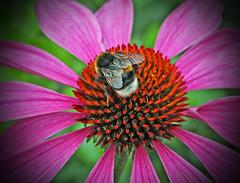 The visitor! (Uhlenhorst) Tags: 2016 germany bavaria bayern animals tiere plants pflanzen flowers blumen blossoms blüten deutschland ngc npc