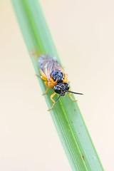Wasp (Henri Koskinen) Tags: pistiinen wasp uutela helsinki finland 26072016
