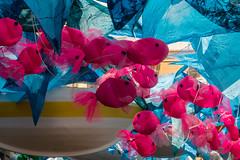 La mar salada | Fraternitat de baix (efit) | La Festa, Grcia! 2016 (Ramon Orom Farr [calBenido]) Tags: lamarsalada frateritatdebaix 1rpremidhonor barcelona catalunya espaa es mar blau blue azul peixos fish vermell roig red rojo sea oce ocenao ocean barca boat grcia festesdegrcia lafestagrcia pelscarrers festes festa fiesta fiestas popular carrer comunidad decoracin decoraci colors colores colours guarniment festamajor