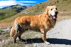 IMG_6652 (rickyrebora) Tags: col basset sauze doulx sestriere summer mountain montagna prati