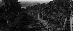 Amost There (Maria Reverberi Studio) Tags: monochrome film italy pienza travel tuscany landscape analogcamera
