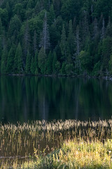 Calme/Calm/Lugn (Elf-8) Tags: lake forest grass sunset dark deep wild pinemfir