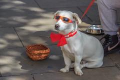 IMG_9619 (brammetje2012) Tags: canon100d canonefs18135stm londen uk dog hond