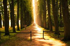 20160724-DSC_0265-1 (ontonivo) Tags: leer germany ostfriesland deutschland allee avenburgsallee sun light