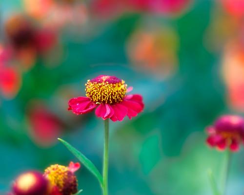 20160817_yard flowers_3347
