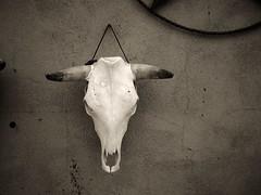 skull (mikerosebery) Tags: skull taos newmexico nm infrared olympusc2020z