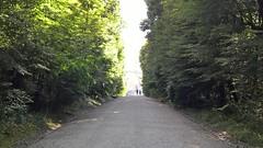 Vienna (heytampa) Tags: vienna austria schnbrunner schlosspark park woods trees gloriette
