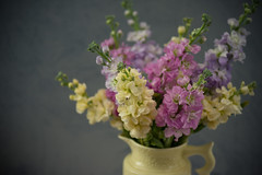 Stock still life (photoart33) Tags: flowers stilllife stocks pastel pink yellow pretty grey vintage