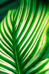 Green line (Riccardo Brig Casarico) Tags: flower verde green colors wow fiori brig riki brigrc