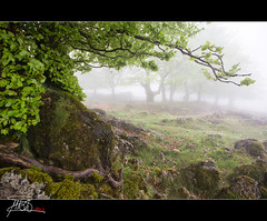 Urbasa (ManuMatas) Tags: bosque niebla urbasa