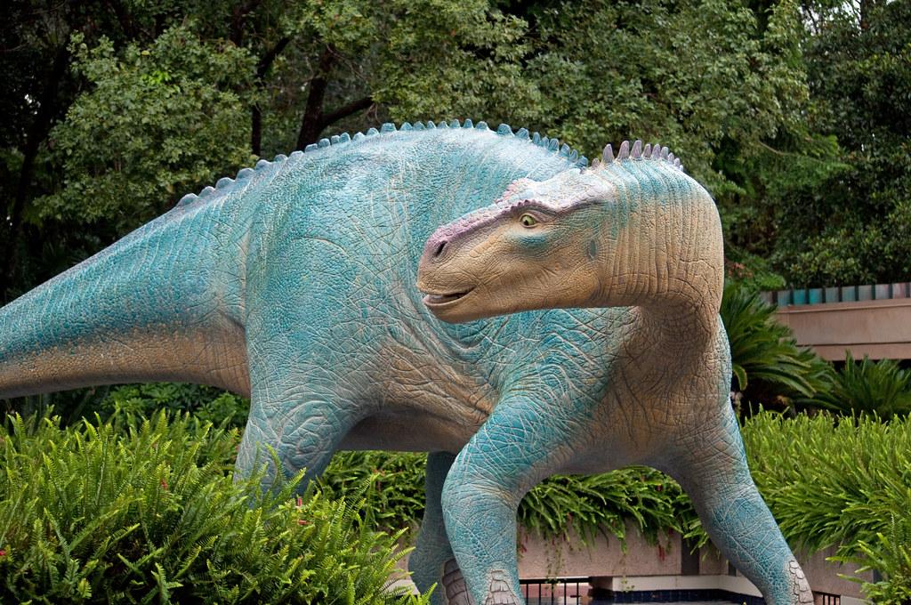 Animal in Extinction Essay