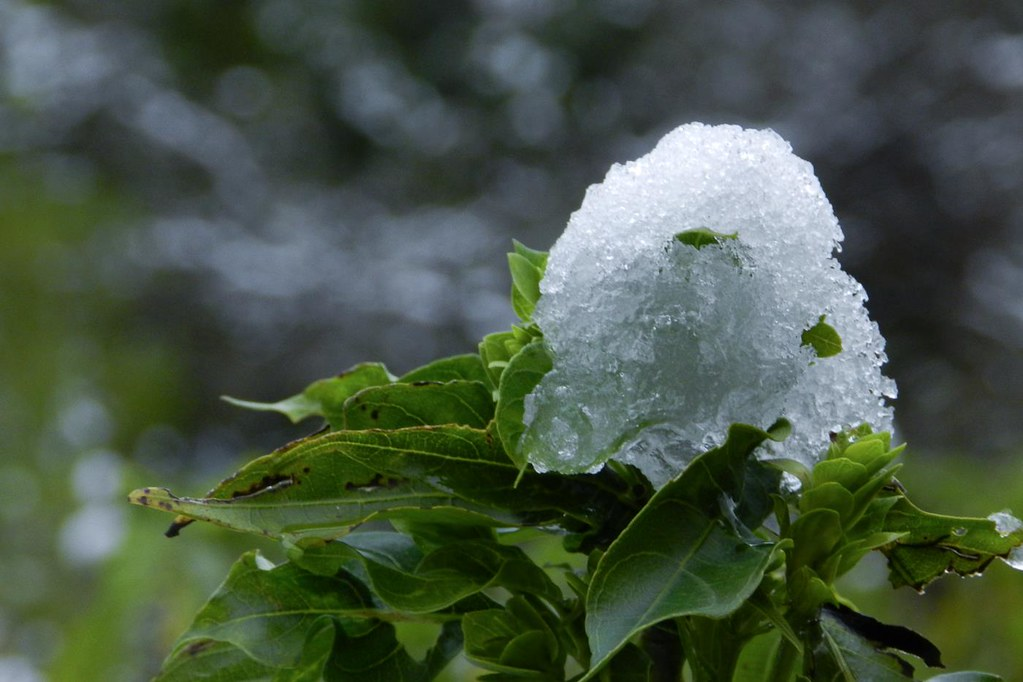 snow snowfall saurabh httpsaurabhworldin