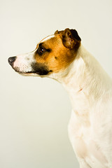 Dave (Penelope Malby Photography) Tags: dog lurcher dogportrait whippetcross