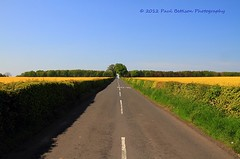Rural Northumberland (Freespirit 1950) Tags: road trees summer england sky flower tree tourism nature field tarmac yellow rural landscape golden countryside scenery track horizon farming north scenic tranquility bluesky farmland rape east route northumberland recreation picturesque tranquil oilseedrape