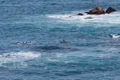 Kaikoura - Peninsula walk (OurPhotoWork) Tags: newzealand holiday nature explore nz southisland orca kaikoura killerwhale orka cetacea nz2011 ourphotowork