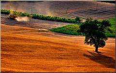 mietitura (Luigi Alesi) Tags: summer italy nature field landscape gold nikon scenery san italia estate natureza severino marche paesaggio tolentino oro giuseppe grano macerata campi d90 coth mietitura mietitrebbia colorphotoaward platinumheartaward coth5 sailsevenseas bewiahn