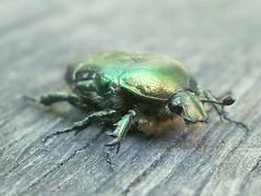 one bug (mdanys) Tags: macro bug bugs lithuania lietuva danys mdanys