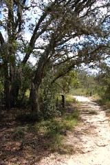 Natural Florida Landscape on Pine Ridge Trail