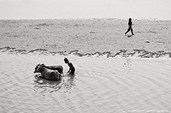 Patterns of Life.... (Z A Y A N) Tags: life summer people bw reflection texture silhouette rural living cow asia earth lifestyle oldman drought environment bangladesh everydaylife climatechange bnw warming struggle globalwarming nationalgeographic southasia natgeo hardship drysoil hardworking riverwater zayan riverpollution manikganj livelihood droughts