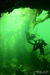 IMG_5953 (2) (SantaFeSandy) Tags: giant snapper turtle cave diving sinks lafayette blue springs state park sandrakosterphotography sandrakosterphotographycom sandykoster sandy sandra santafesandysandrakosterphotographycom sandrakoster algae green sink stevens 1 snake