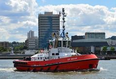 ZP Bear @ Woolwich Reach 31-07-16 (AJBC_1) Tags: riverthames london ship boat vessel dlrblog england unitedkingdom uk ajc northwoolwich eastlondon newham londonboroughofnewham tug tugboat zpbear nikond3200 shipsinpictures kotugsmittowage woolwichreach