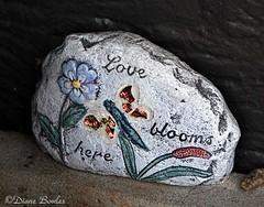 Love blooms here (bowles.m@att.net) Tags: stilllife rocks
