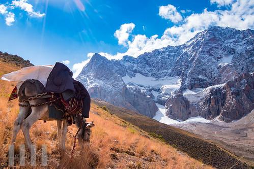 Pack donkey near Munora Pass, Fann Mountains, Tajikistan.