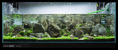 Green Aqua Showroom (viktorlantos) Tags: aquascaping aquascape adahungary aquariumplants aquarium aquascapingshopbudapest aquadesignamano plantedaquarium plantedtank plantedaquariumgallery greenaquagallery greenaquahungary nvnyesakvrium hardscape frodostone mountain underwaterlandscape underwaterworld