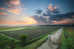 Sawah di pagi hari, Jember (Indonesian-based photographer & story teller) Tags: alfianwidi people sawah village nonurban pagi morning sunrise