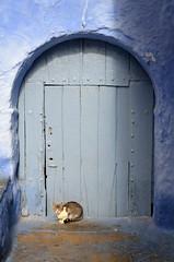 Chefchaouen (14) (jim_skreech) Tags: chefchaouen chaouen morocco ref blue cat