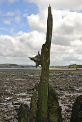 Groyne (carolyngifford) Tags: groyne dunster beach