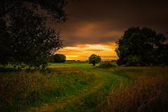 A tree (radonracer) Tags: herbst niederrhein germany gras sky sun tree field clouds