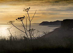 Freshwater Sunset (Carolbreeze99) Tags: dorset bridport freshwater burtonbradstock cliffs sea ocean sunset goldenhour landscape scape seascape silhouette plants contrast light evening