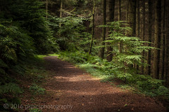 Exmoor Woods (PKpics1) Tags: exmoor westsomerset woods trees grass green trunks leaves