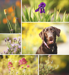 Spring (17/52) (anthonyhelton.com) Tags: dogs for weeks 52