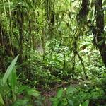 """BIO 245: Ecology of Ecuador<a href=""""http://farm9.static.flickr.com/8002/6996070468_a0da7e2173_o.jpg"""" title=""""High res"""">∝</a>"""