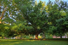 Campus Tree (doriboyd) Tags: tree green canon interesting alabama lush whimsical montevallo ecoscape 5dmarkii