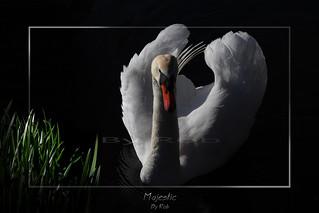 Swan mark 2