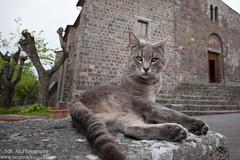IMG_6932.jpg (SdR Art Photography) Tags: cats church medieval tuscany valdorcia radicofani