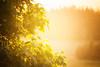 Summer fairies (Aspiriini) Tags: summer sun tree maple bokeh puu kesä vaahtera aurinko jonilehto aspiriini