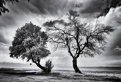 (windrides) Tags: trees sea beach nikon greece infrared d300
