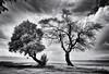 (windrides) Tags: trees sea beach nikon greece infrared d300