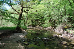 Babbling Brook (Dick Dangerous) Tags: tree river rocks stream slovenia brook notranjska kocjan rakov