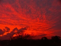 West Auckland skies (Zelda Wynn) Tags: sunset red beautiful weather clouds stunning troposphere westauckland weatherwatch zeldawynnphotography spectacularsunsetskies
