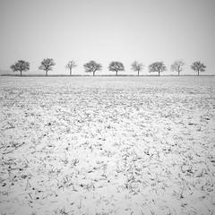 Nine (Alain Baumgarten) Tags: trees winter mist snow art nature fog canon square hiver fineart squareformat neige arbre brouillard bsquare