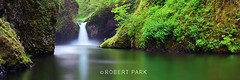 """Emerald Garden"" By Robert Park  http://www.robert-park.com (Robert Park Photography) Tags: travel vegas trees newyork tree art tourism nature racetrack wonder point landscape photography waterfall nationalpark gallery photographer natural lasvegas wildlife nevada fineart soho galleries national collectors naturalwonders pigeonpoint fineartphotography wolfe macrophotography autofocus lasvegasstrip striplas thepalazzo lasvegasshopping awesometrees robertpark simplysuper theshoppesatthepalazzo ""flickraward photoenlargements photographycollectors mygearandme mygearandmepremium mygearandmebronze dblringexcellence flickrbronzetrophygroup tplringexcellence photocontesttnc12 dailynaturetnc12 rememberthatmomentlevel1 robertbpark naturalwondersgallery theshoppesatthepalazzonevadagallery httpwwwrobertparkcom robertparkcom"